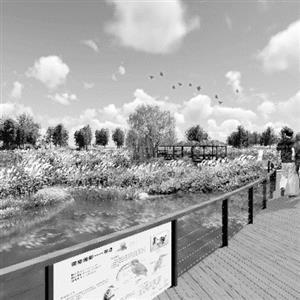 南京新济洲国家级湿地公园开放时间再次临近_大苏网_腾讯网