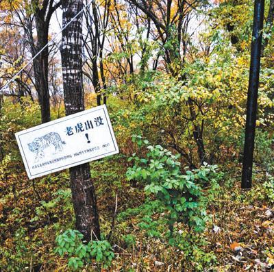 虎豹出没 国家公园怎么建?