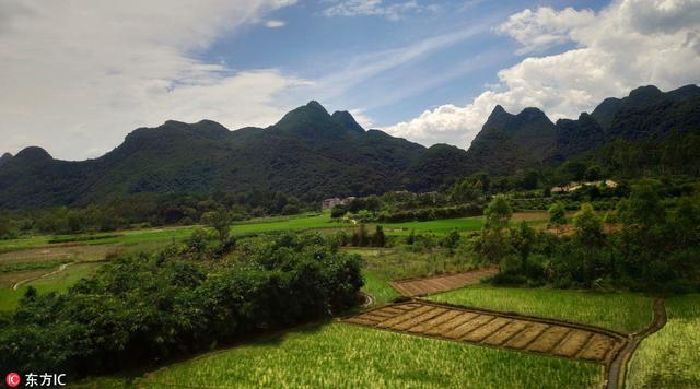 今年夏粮收购近尾声 订单种植助力增收