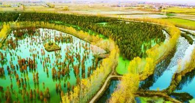 南京六合千亩水杉林层林尽染 秋色迷人
