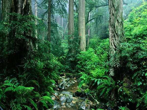 壁紙 風景 森林 桌面 600_448
