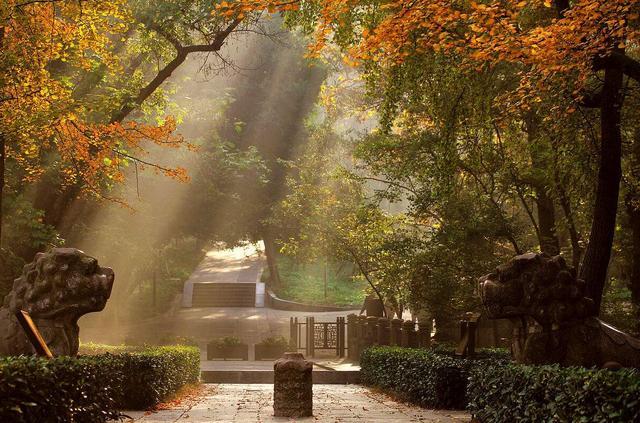 南京又多了一条最美道路