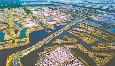 """泗洪洪泽湖湿地""""迷宫""""风景如画"""
