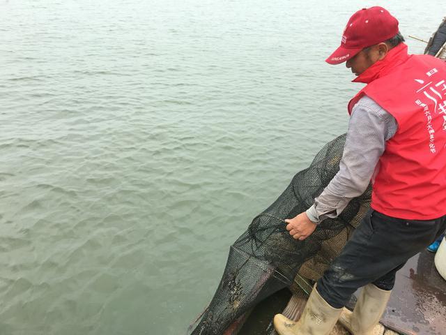 阳澄湖大闸蟹捆绑新标准发布 六月黄10日起全面上市