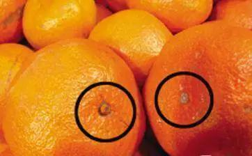 水果居然也分公和母图片