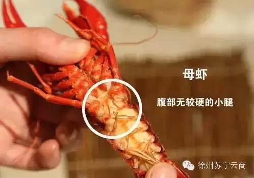 吃虾过敏能吃小龙虾吗|小龙虾怎么吃:吃虾的季节来临你真的会吃虾吗