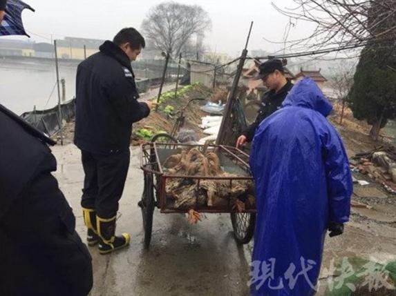 泰州民警抓获专门盗窃家禽嫌疑人 涉及家禽400余