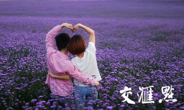 许你一片浪漫紫色花海 镇江30亩马鞭草已梦幻盛放