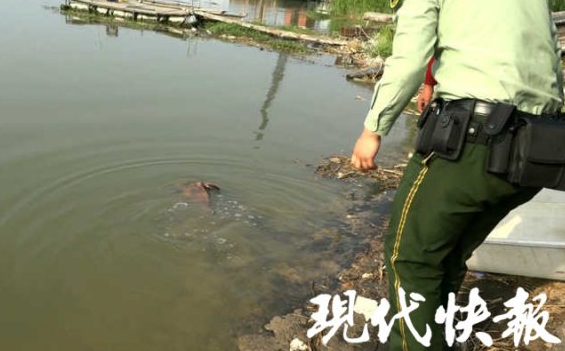 渔民捕到一条奇怪大鱼 竟是国家二类保护动物
