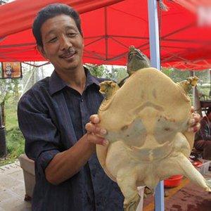 9.7斤野生甲鱼出没洪泽湖