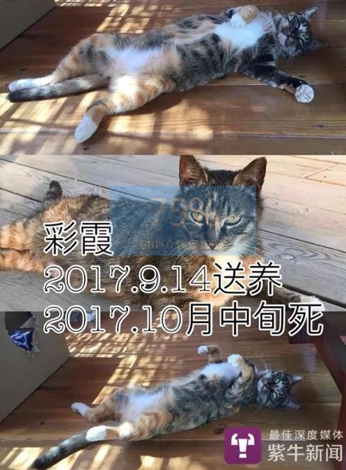 南京男子相继收养9只猫 可它们要么摔死要么失踪