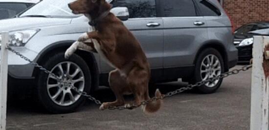 【文娱福利社】《一条狗的使命》献映 参与话题赢好礼