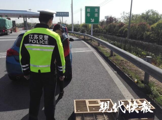 镇江这名女子高速上违法停车 竟是为了放鸽子