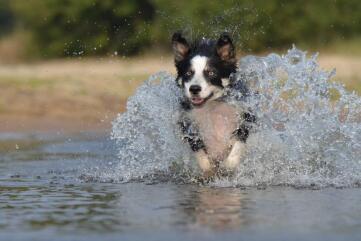 怎么鉴别狗狗有关节炎?WOWO氨糖关节健有妙招