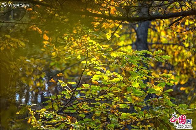 """""""北方小黄山""""六里坪秋色绚烂 美的让人窒息"""