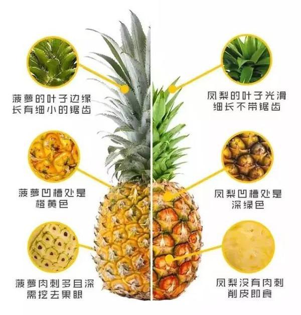 菠萝跟凤梨是同一种水果吗?有没有区别?