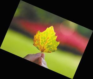 徐州的秋天什么树最先落叶 专家:可能是梧桐