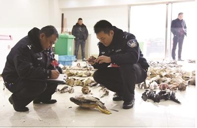 宿迁一水产批发商铺查出600多只濒危野生动物