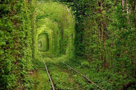 三,乌克兰的 爱之隧道 世界最美林荫大道图片高清图片