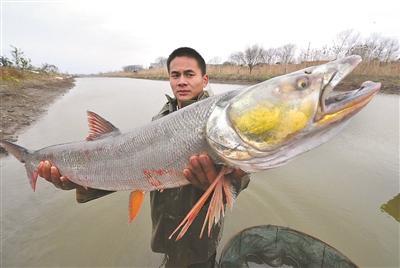 镇江捕获一条长江野生鳡鱼长约一米重达18斤图片