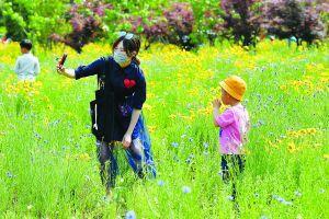 淮安白马湖森林公园五彩美景吸引游客赏花拍照