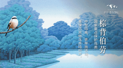 新湖·香格里拉:在世界文明深处 聆听天籁