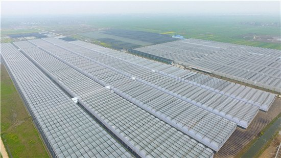 钟祥大柴湖打造中国花城 1000亩产值顶原来10万亩