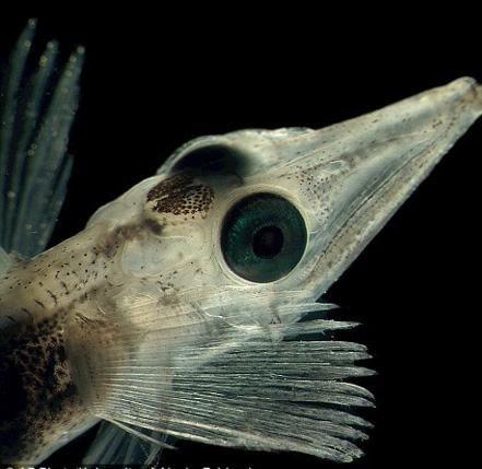 、6种海鸟和近100种甲壳类动物.资料图-海洋生物普查发现数千新