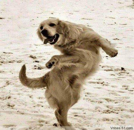 """动物们的""""嫣然一笑""""和优美舞姿 - 红叶风萧萧  - 红叶风萧萧"""