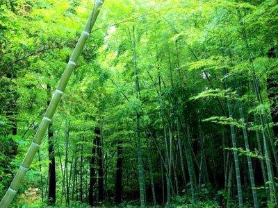 (范文)我爱故乡的竹林