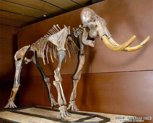 组图:超级珍贵的史前动物化石