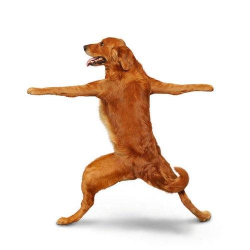笑死人的狗狗瑜伽 21式 - 红叶风萧萧  - 红叶风萧萧