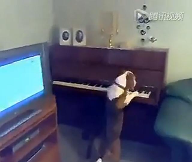 超牛掰!狗狗弹钢琴 一边弹一边唱!