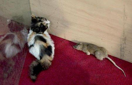 原题:震惊  女孩怀孕后却生下20只 老鼠 18岁少女误用卫生巾 怀老鼠