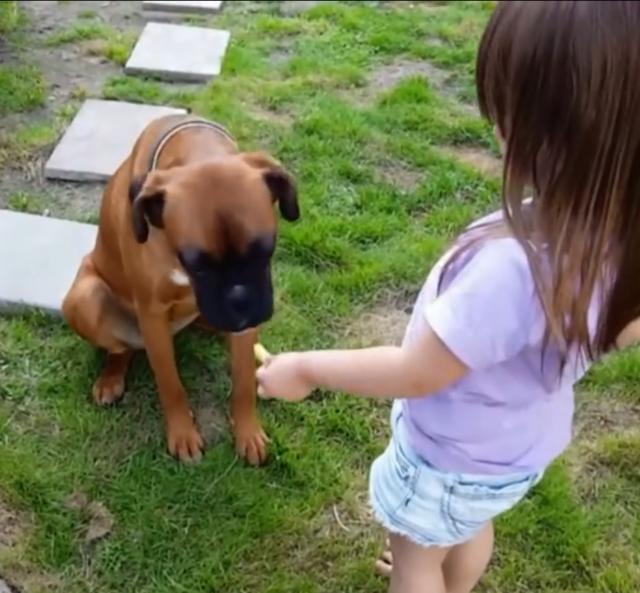 可爱宝宝和宠物狗狗的开心时刻