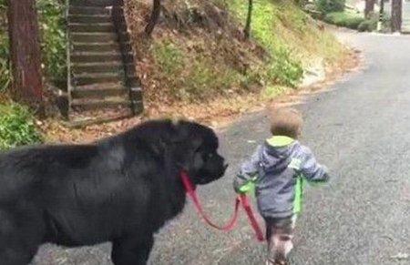 两岁小男孩被骂后牵着狗狗离家出走,让跟着的家人哭笑不得!