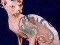 组图:身价不菲的超另类动物纹身