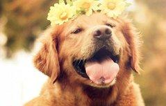 可爱狗狗手机壁纸