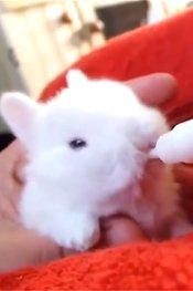 兔宝宝吃奶的爆炸可爱模样