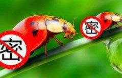 昆虫如何便便?