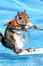 松鼠化身专业滑水运动员