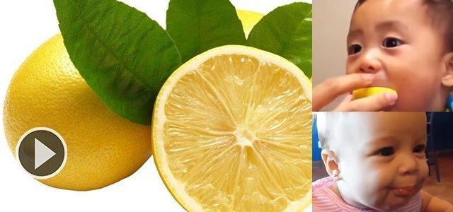 小宝贝们第一次吃柠檬!隔着屏幕都要咽口水啦
