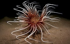 奇妙水下世界�摄影师耗时六年拍奇特海洋动物