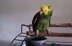 鹦鹉成精啦!