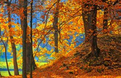 森林美景桌面壁纸