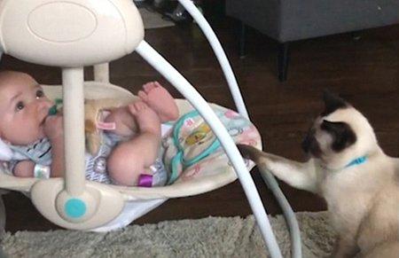 最萌保姆!乖巧暹罗猫推动摇篮哄婴儿入睡