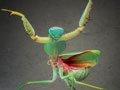 组图:近距离拍摄螳螂 外形奇特犹如外星人