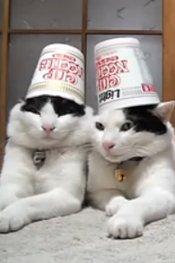 四只淡定猫咪顶物纹丝不动