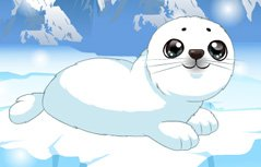小海豹受伤了
