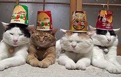 四只淡定猫咪练顶物功纹丝不动